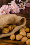 Almonds of fall Stock Photos