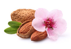 Almonds with flower Stock Images