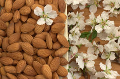 Almonds, flowering almonds. Royalty Free Stock Images