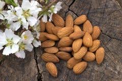 Almonds, flowering almonds. Stock Photos