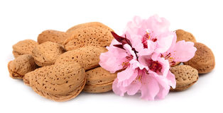 Almonds with flowers Royalty Free Stock Photos