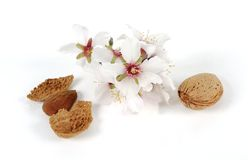 Almonds and flowers Stock Photography