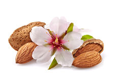 Almonds with flowers Stock Photos