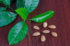 Almonds. And green leaves on brown background Royalty Free Stock Photos