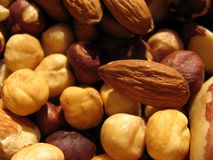 Almonds and hazelnuts Stock Image
