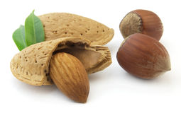 Almonds with hazelnuts Stock Photos