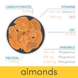 Almonds  infographic Stock Images