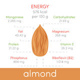 Almonds  infographic Stock Image