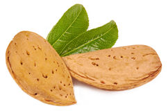 Almonds isolated in close up Royalty Free Stock Photo
