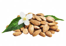 Almonds Isolated with Flower and Leaf Royalty Free Stock Image