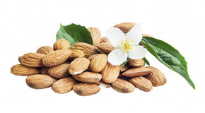 Almonds Isolated with Flower and Leaf Stock Images