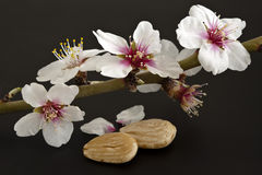 Almonds with its flower Royalty Free Stock Photos