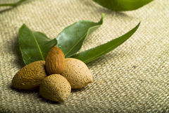 Almonds (kernel and leaves). On natural canvas stock image