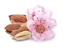 Almonds kernel with pink flowers Stock Photography