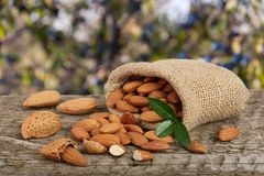 Almonds with leaf in bag from sacking on a wooden table with blurred garden background.  Stock Image