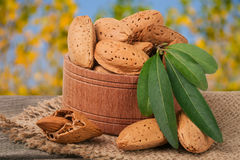 Almonds with leaves in a bowl on the old wooden board  blurred garden background Stock Image