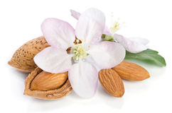 Almonds with leaves and flower close up Stock Images