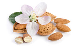 Almonds with leaves and flower Royalty Free Stock Image
