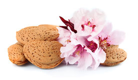Almonds with leaves and flowers Stock Photography
