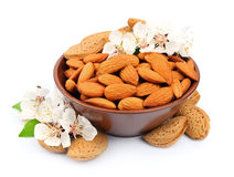 Almonds with leaves Stock Image