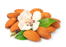 Almonds with leaves and flowers Royalty Free Stock Image