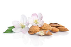 Almonds with leaves and flowers Stock Images