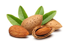 Almonds and leaves Stock Images