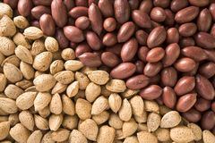 Almonds and Pecans Royalty Free Stock Photography