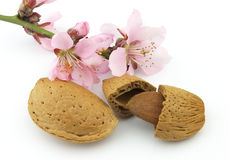 Almonds with pink flowers Royalty Free Stock Images