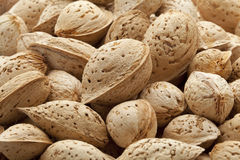 Almonds in the pod Stock Image