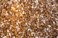 Almonds in raw form unroasted and unsalted Stock Images