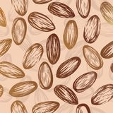 Almonds seamless vector background Royalty Free Stock Photo