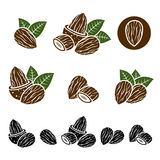 Almonds set. Vector Royalty Free Stock Images