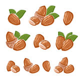 Almonds set. Vector Stock Photos