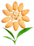 Almonds in the shape of a sun with a leaves Royalty Free Stock Image