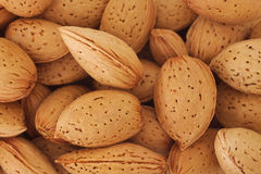 Almonds in the shell Royalty Free Stock Images