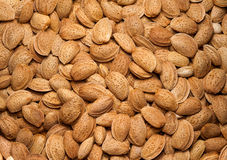 Almonds in shell Royalty Free Stock Photo