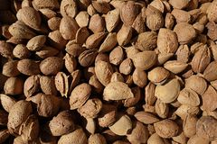 Almonds with shell. Fresh in market Royalty Free Stock Photos
