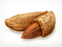 Almonds in shell, vector icon Stock Photography