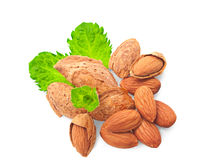 Almonds and a sprig of mint. Royalty Free Stock Image
