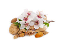 Almonds with a sprig on white. Stock Photos