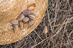 Almonds on a straw hat. Stock Photos