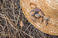 Almonds on a straw hat. Stock Image