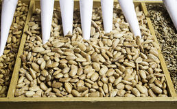 Almonds with sugar Stock Photo