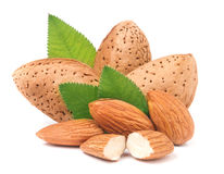 Almonds in their skins and peeled with leaf isolated on white background Stock Image