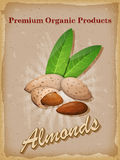 Almonds vintage poster. Vector illustration. Royalty Free Stock Images