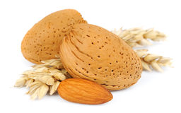 Almonds with wheat Royalty Free Stock Photo