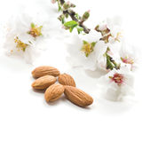 Almonds on a white Stock Images