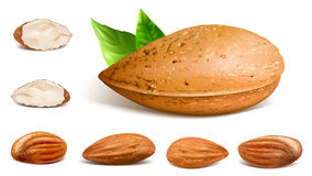 Almonds whole and kernels Royalty Free Stock Photos