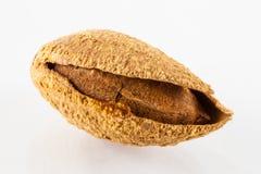 Almons grillés Photos libres de droits